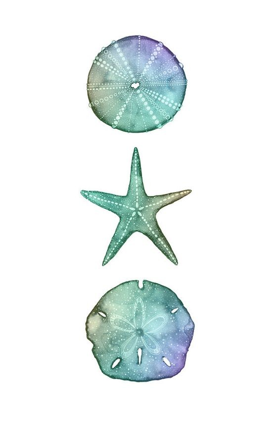 Lovely turquoise-and-purple starfish between shells tattoo design