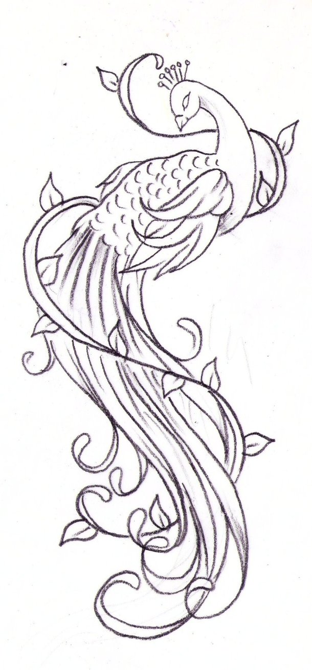 Lovely uncolored peacock with swirly tail tattoo design by Nevermore Ink