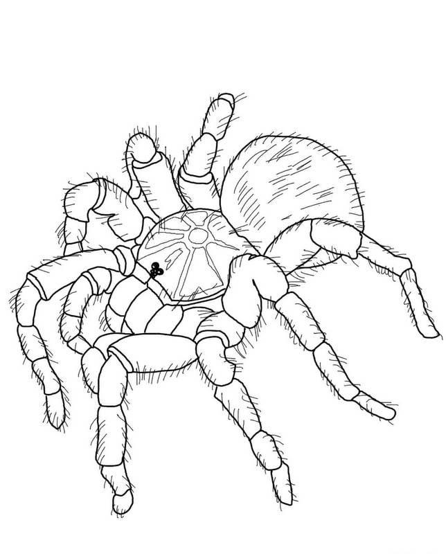 Lovely uncolored tarantula spider tattoo design
