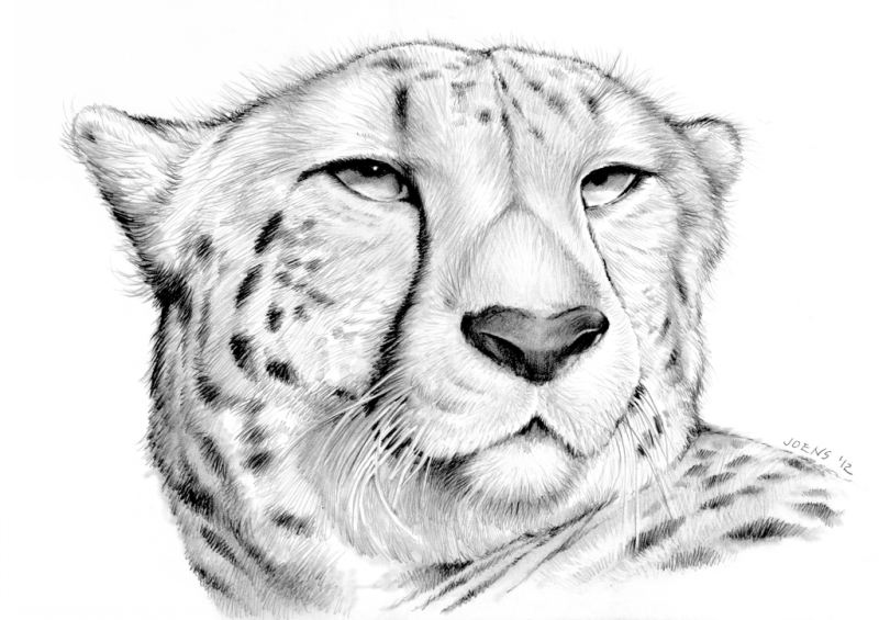 Luxury grey-ink cheetah head tattoo design by Greg Chapin
