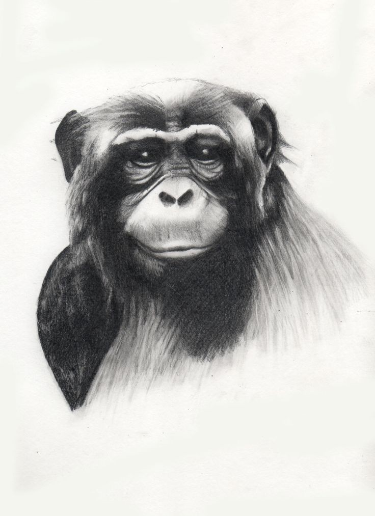 Luxury grey-ink chimpanzee portrait tattoo design