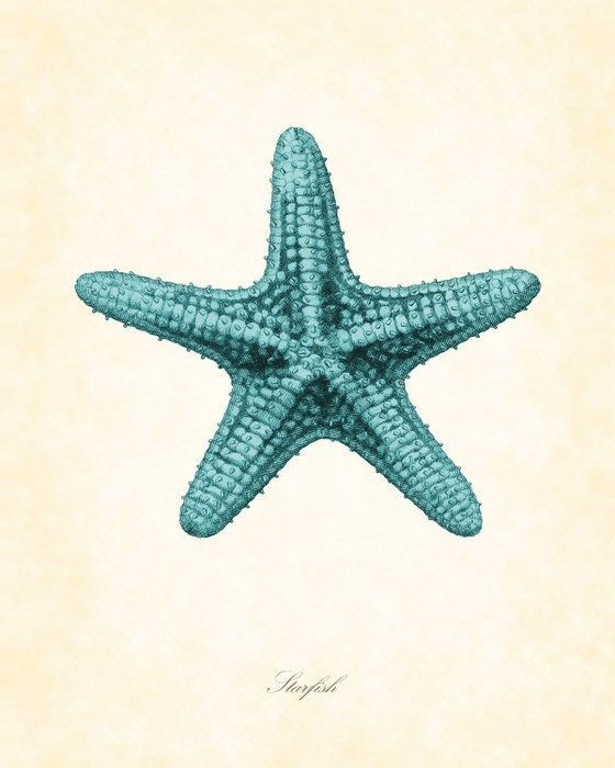Luxury turquoise starfish tattoo design