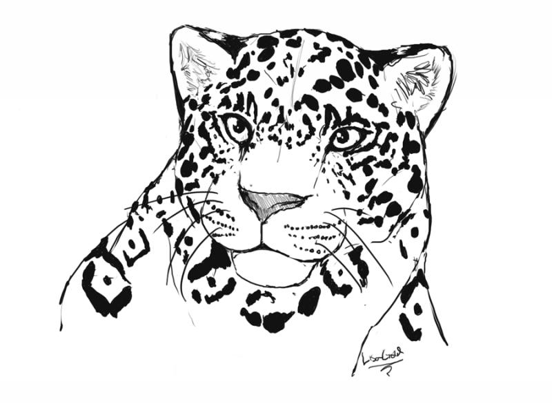 Marvelous black-and-white jaguar portrait tattoo design by Chrysaetos Pteron