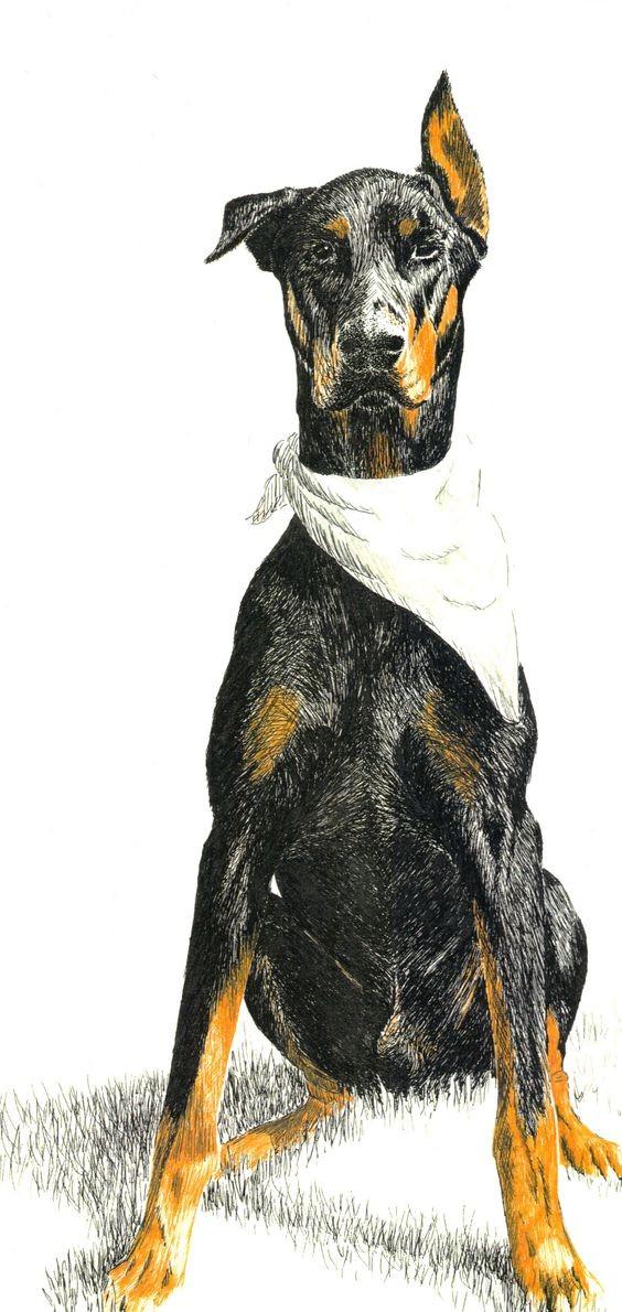 Marvelous colored doberman with white bandana on neck tattoo design