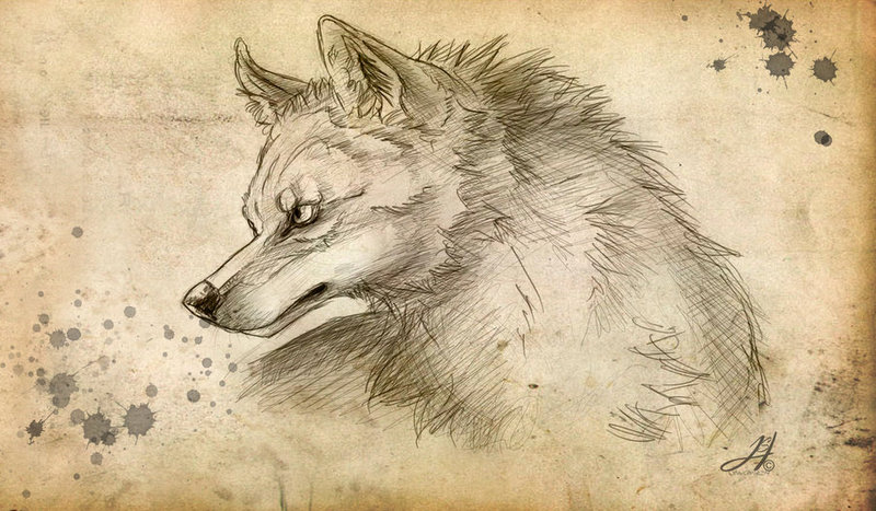 Nice animated pencil-drawing wolf tattoo design