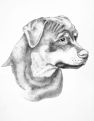 Nice dotwork style rottweiler portrait tattoo design