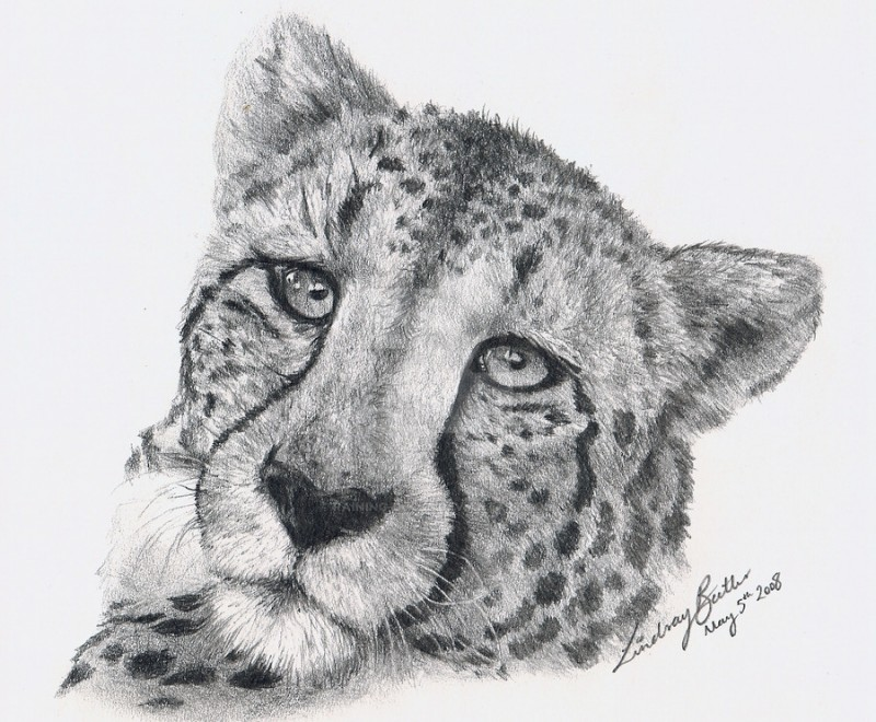 Nice grey-ink cheetah portrait tattoo design by Raining Ducks