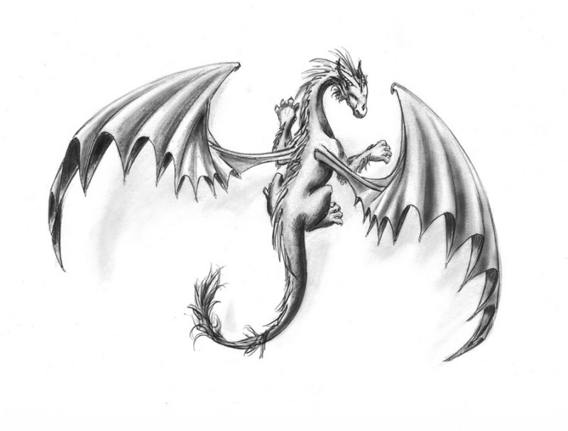 Nice Grey Ink Drawing Dragon With Huge Wings Tattoo Design