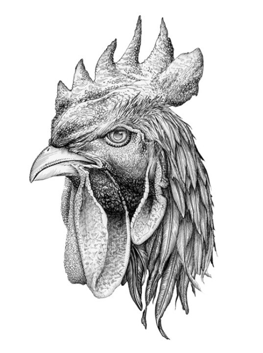 Nice grey ink rooster head tattoo design for Funky rooster tattoo and art gallery