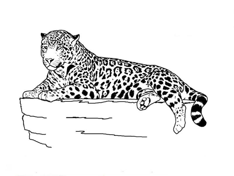 Nice outline jaguar lying on flash rock tattoo design