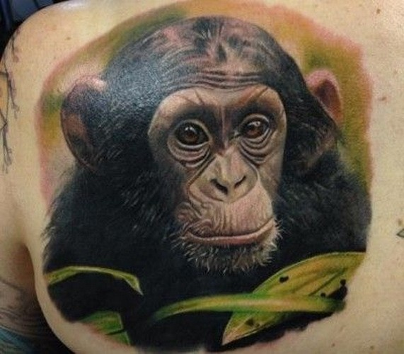 Great Chimpanzee Pictures