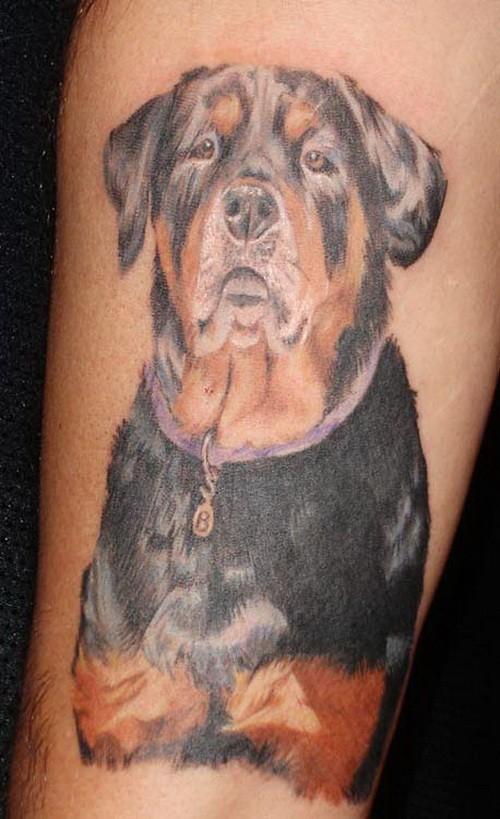 Nice realistic colorful rottweiler tattoo on arm