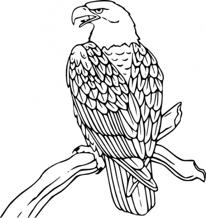 Nice uncolored eagle sitting on tree branch tattoo design