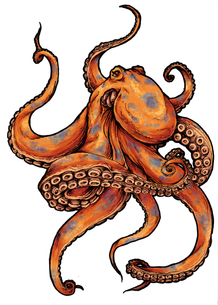 Octopus tattoo designs Page 5 Tattooimagesbiz