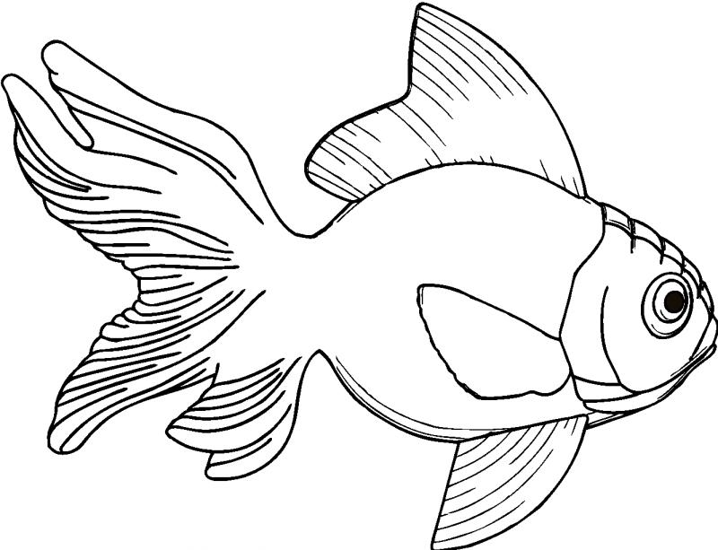 Outline wrinkle-headed gold fish tattoo design