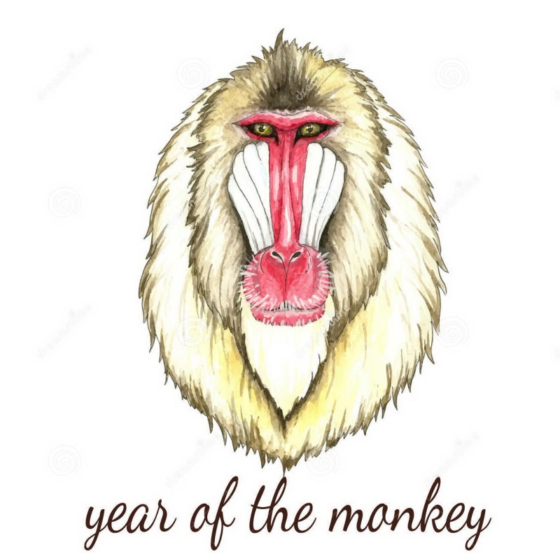 Painting pink-and-brown baboon portrait with lettering tattoo design