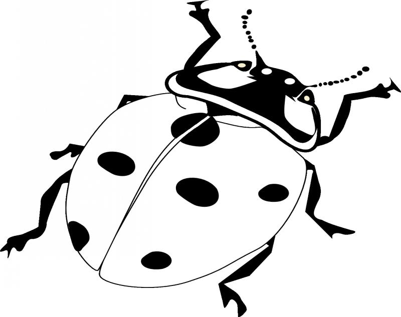 Plain black-and-white ladybug crawling up tattoo design