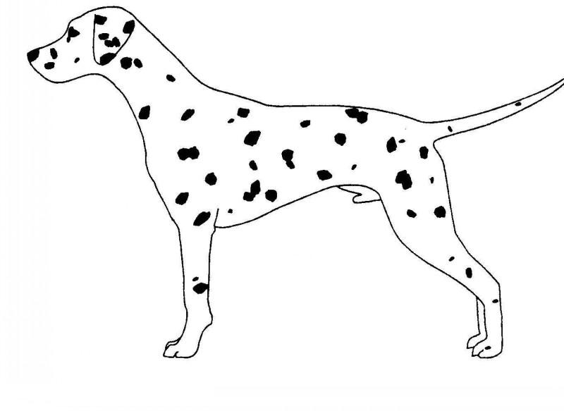 Plain spotted dalmatian dog tattoo design