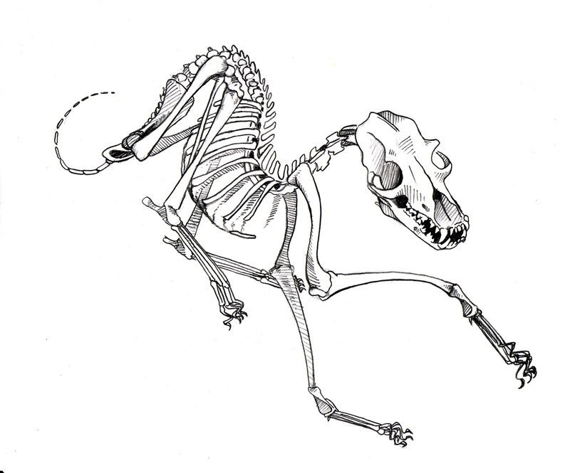 Playing dog skeleton tattoo design