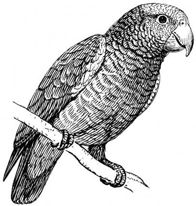 Pleased black-ink sitting parrot tattoo design