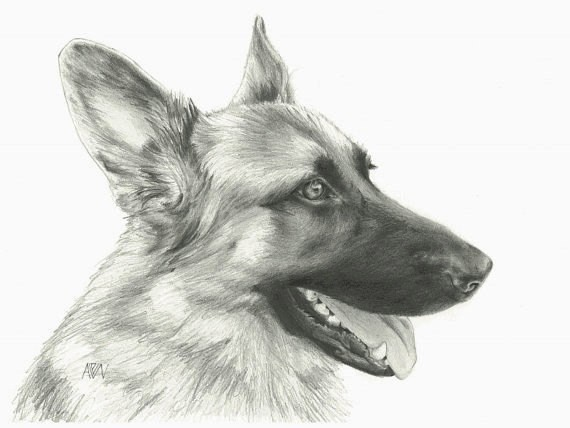 Pleased grey-ink german shepherd head in profile tattoo design