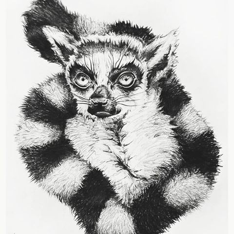 Posh black-and-white lemur portrait curled with tail tattoo design