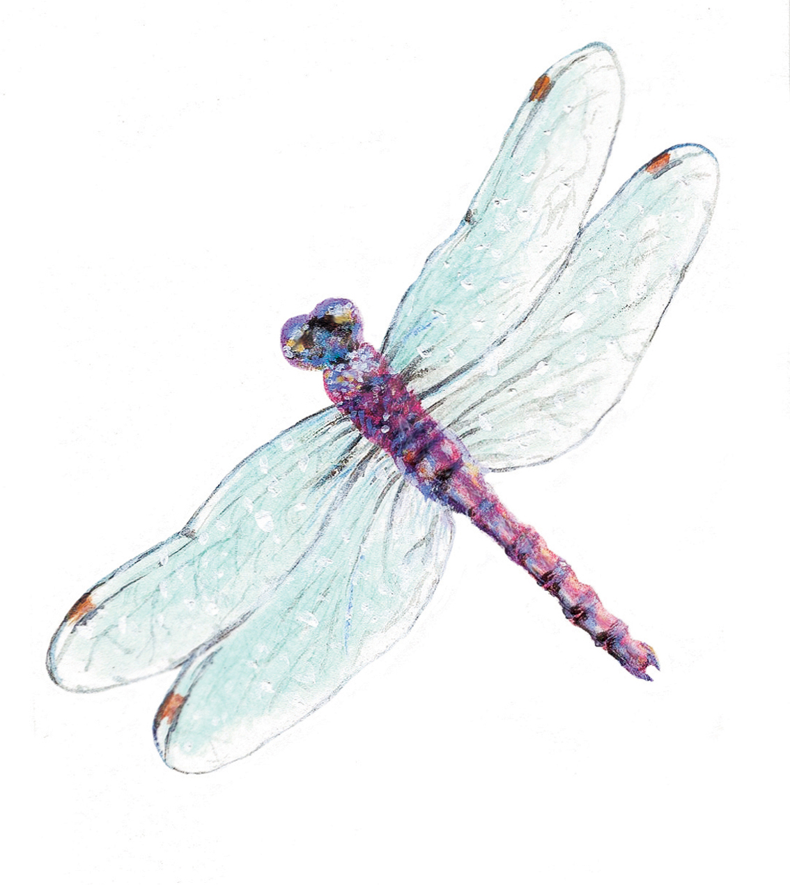 purple body dragonfly with light blue wings tattoo design. Black Bedroom Furniture Sets. Home Design Ideas