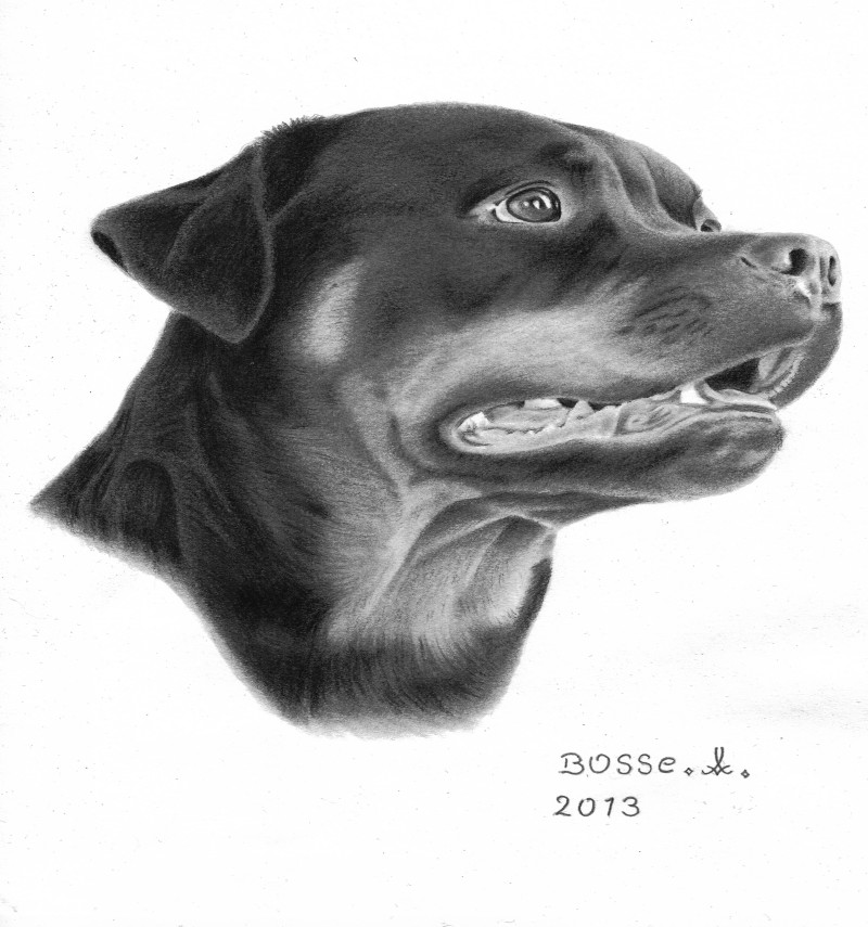 Realistic black-and-white rottweiler waiting for order tattoo design by Torsk1