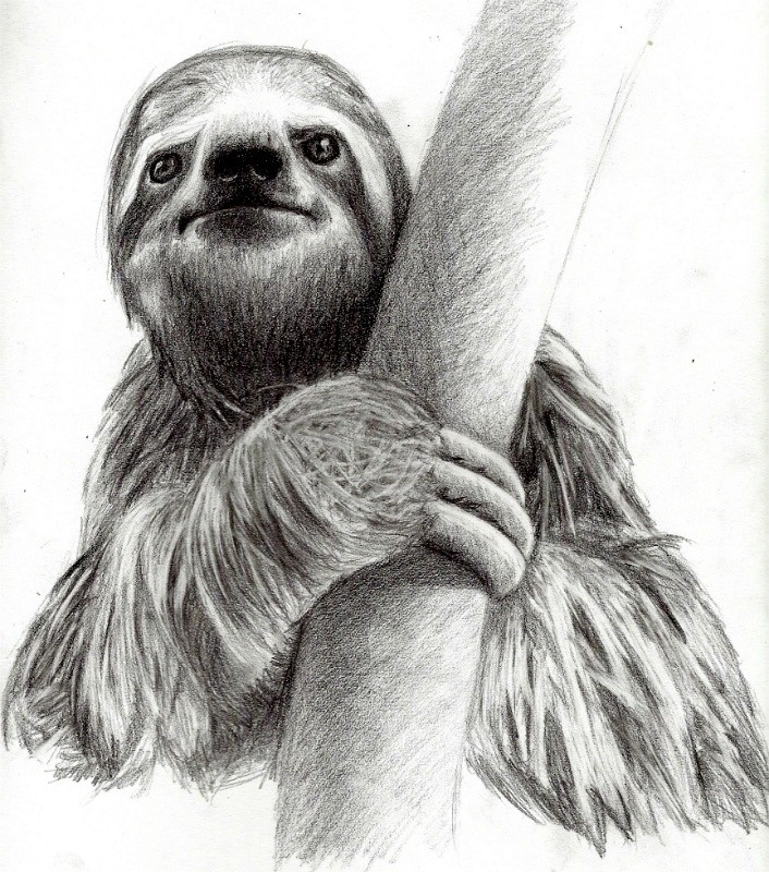Realistic black-and-white sloth hiding behind tree tattoo design
