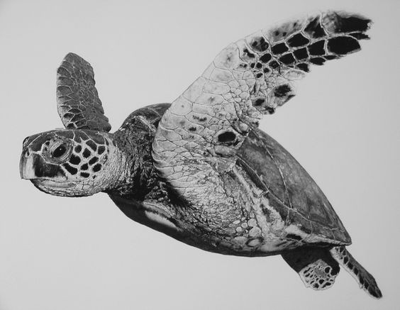 Realistic black and white turtle swimming in ocean tattoo for Ocean tattoos black and white