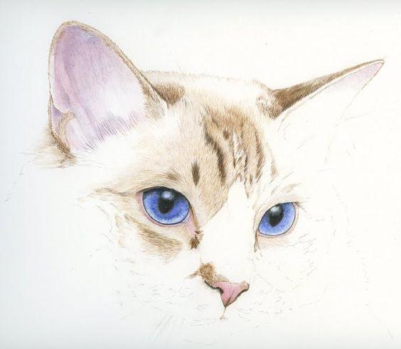 Realistic blue-eyed cat muzzle tattoo design