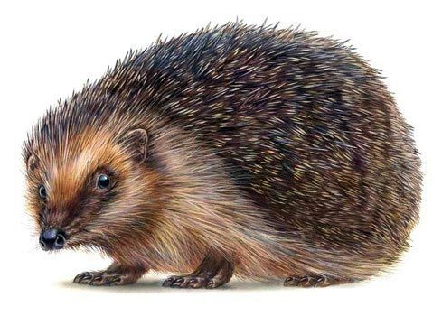Realistic colored static hedgehog tattoo design