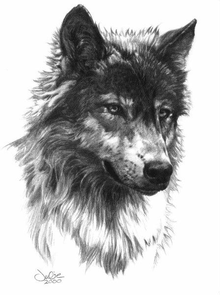 Realistic dark-pencil wolf portrait tattoo design