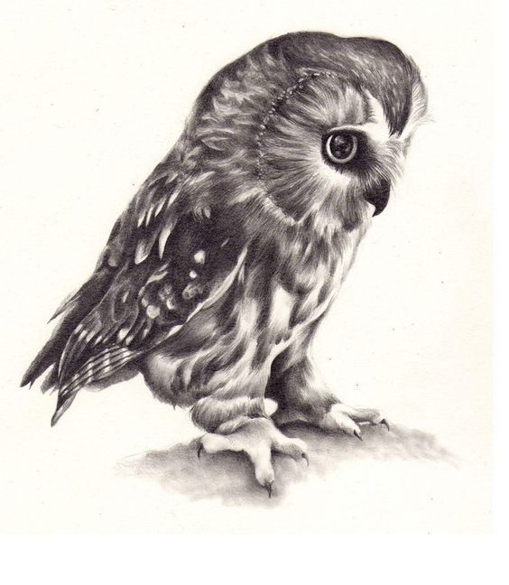 Realistic full-size black-and-white owl tattoo design