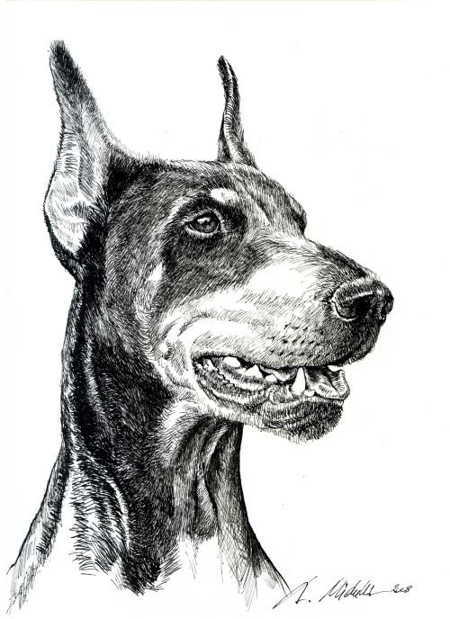 Realistic grey-and-black doberman dog portrait tattoo design