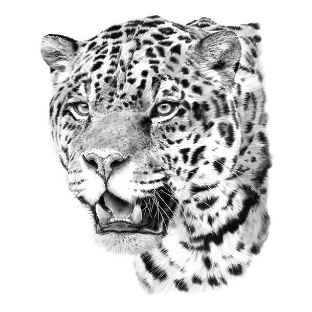 Realistic grey-ink jaguar head tattoo design