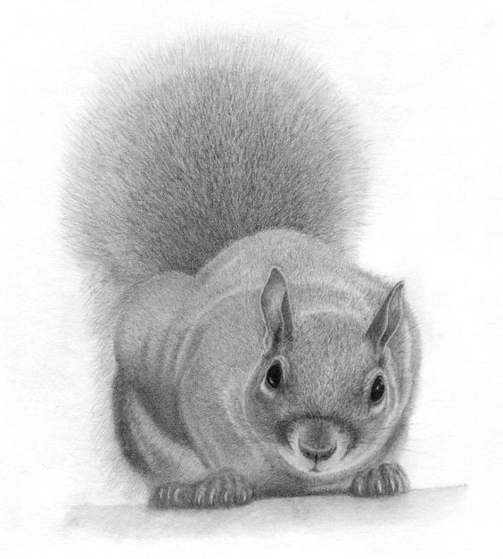 Realistic grey-ink squirrel with fluffy tail tattoo design