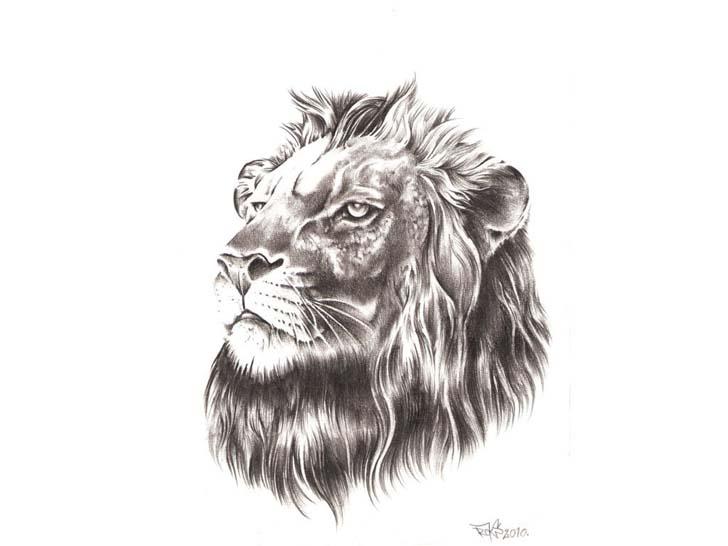 realistic greypencil lion head tattoo design