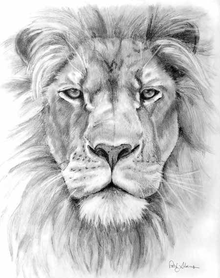 Realistic grey-pencil lion portrait tattoo design