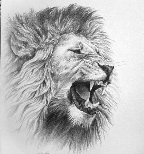Realistic grey roaring lion head tattoo design