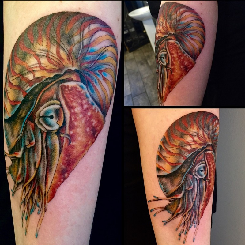 Realistic looking colored arm tattoo of big nautilus