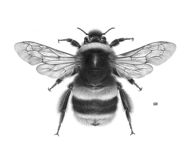 Realistic uncolored sitting bee tattoo design ...