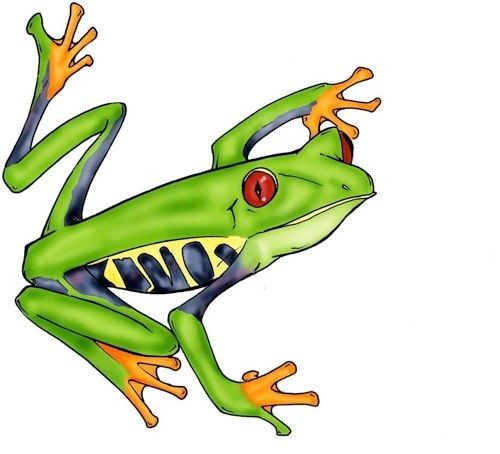Red-eyed frog with orange legs tattoo design