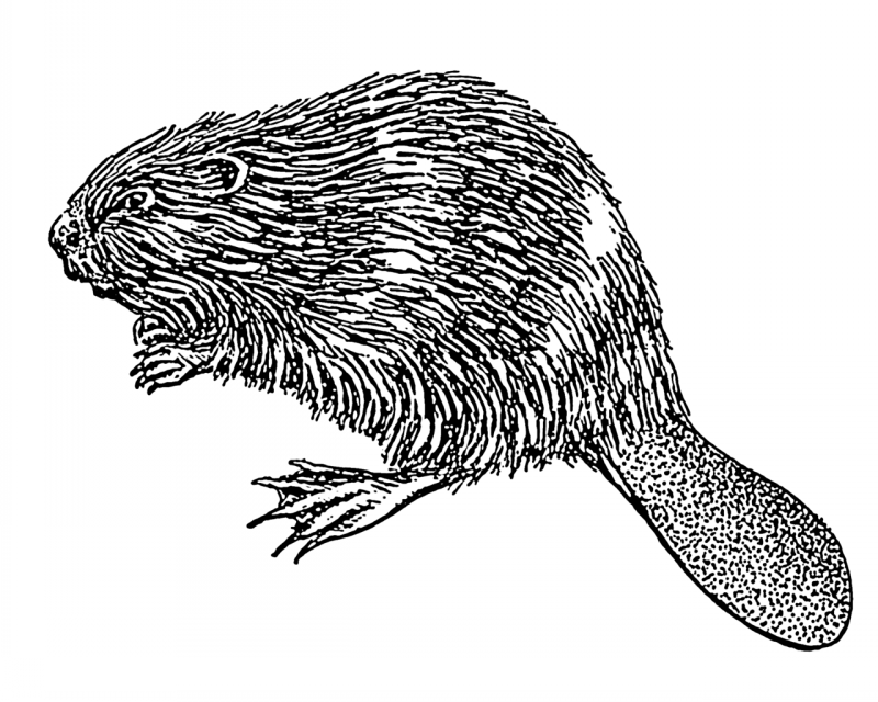 Scary black-and-white rodent tattoo design