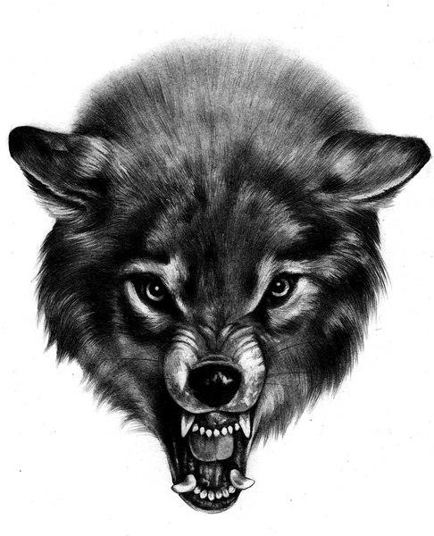 Scary realistic black-pencil wolf head tattoo design