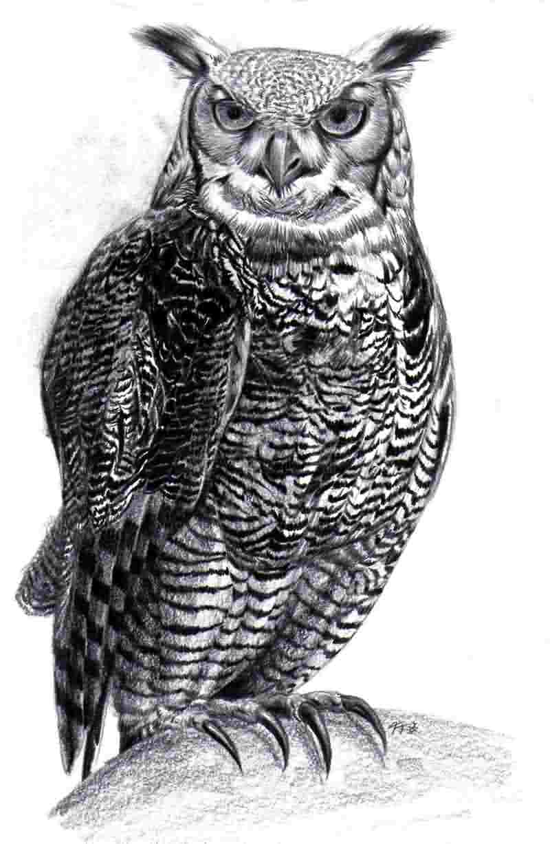 Severe huge full-size grey owl tattoo design