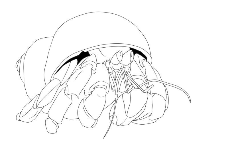 Shy outline hermit crab tattoo design