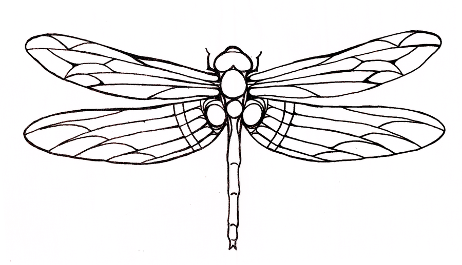Dragonfly Tattoo Line Drawing : Simple big outline dragonfly tattoo design tattooimages