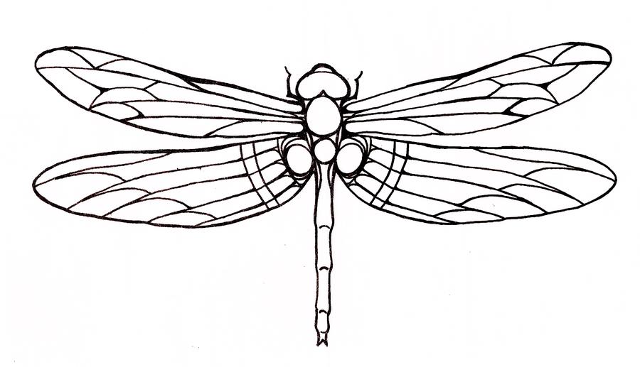 Simple Big Outline Dragonfly Tattoo Design Tattooimages Biz