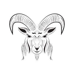 simple black and grey outline ram tattoo design. Black Bedroom Furniture Sets. Home Design Ideas